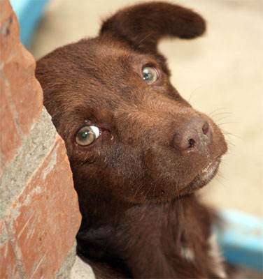 Домашние животные - Фото домашних животных - Виды 58