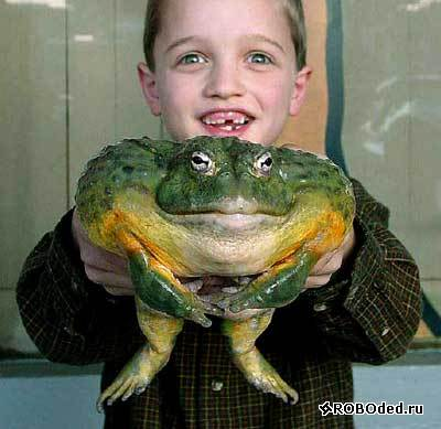 скиньте жабу