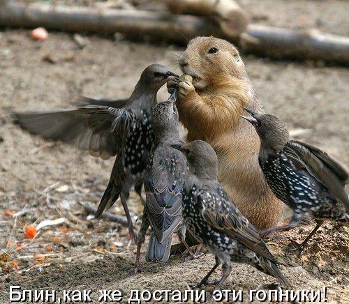 фотографий и видео. / Приколы животных ...: www.animalgrad.ru/blog/prikoli_zhivotnix/264.html